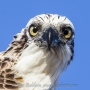 osprey-gton09_87
