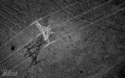 Aerial-2