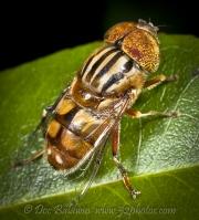 bugs011