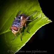 fly012