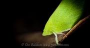 planthopper039