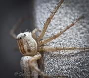 spider macro_16